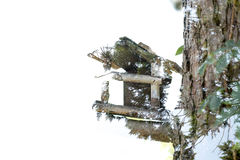 Double exposure birdhouse. Combining silhouette of birdhouse wit typical branch and tree texture Royalty Free Stock Photo