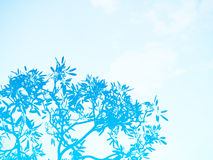 Double exposure blue tree over blue sky Royalty Free Stock Images