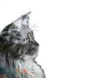 Double exposure of a cat, goldfishes and trees Stock Photography