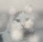 Double exposure of the cat Stock Photography