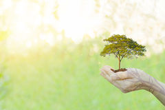 Double Exposure Ecology concept Human hands holding. Big plant tree pollution with on blurred sunset background,World Environment Day Stock Photography