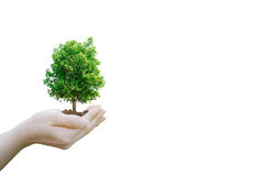Double Exposure Ecology concept Human hands holding. Big plant tree pollution with on blurred sunset background,World Environment Day Royalty Free Stock Image