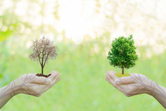Double Exposure Ecology concept idea Human hands holding big plant tree city. Sunset background,World Environment Day Royalty Free Stock Photos
