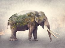 Double exposure of elephant and palm trees stock photos