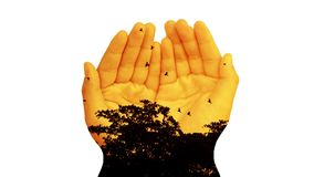 Double exposure, flocks of birds fly in and out of the tree at sunset time with child hands stock footage