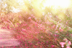 double exposure of flower field bloom, abstract photo Stock Photo