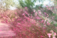 double exposure of flower field bloom, abstract photo Royalty Free Stock Photo