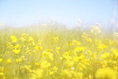 Double exposure of flower field bloom, creating abstract and dreamy photo Stock Photo