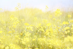 Double exposure of flower field bloom, creating abstract and dreamy photo Royalty Free Stock Photography