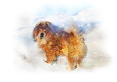 Double Exposure From A Red-haired Dog And Landscape Of Mountain Royalty Free Stock Photos