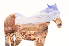 Double exposure of horse and desert Royalty Free Stock Photography
