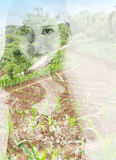 Double exposure image of a young woman and Idyllic scenery Stock Image