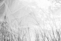 Double exposure photo of tree branches in fall against sky and textured fabric layer.  Stock Photos