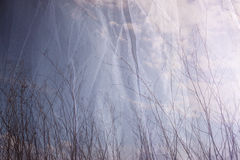 Double exposure photo of tree branches in fall against sky and textured fabric layer.  Royalty Free Stock Photography
