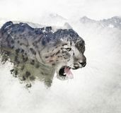 Double exposure of a snow leopard and mountains. Double exposure of a snow leopard head and mountains vector illustration