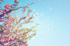 Double exposure of Spring Cherry blossoms tree. abstract background. dreamy concept with glitter overlay Stock Image