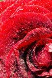 Double Exposure-The Stone Rose Stock Photo