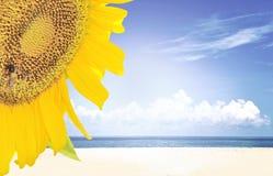 Double exposure sunflower Royalty Free Stock Image