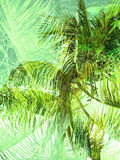 Double exposure tropical jungle abstract background Stock Images