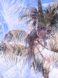 Double exposure tropical jungle abstract background Royalty Free Stock Images