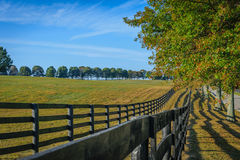 Double fenced horse pasture. Double fenced, tree lined horse pasture in Fayette County Kentucky near Lexington stock photos