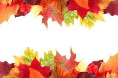 Double frontière des feuilles d'automne colorées vibrantes Photographie stock libre de droits