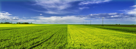 Double green field Royalty Free Stock Photography