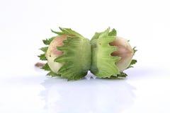 Double Hazelnut Stock Photos