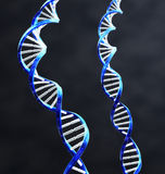 Double Helix. 2 double helix strands of DNA with Dark background Royalty Free Stock Image
