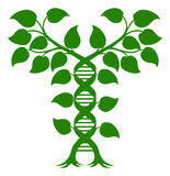 Double Helix DNA Plant Concept. DNA Plant Double Helix Concept, can refer to alternative medicine, crop gene modification or other healthcare or medical theme vector illustration