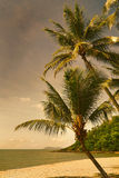 Double Island view with palms in the sunset Stock Photography