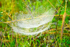 Double Layered Spider Web. With Dew Droplets in Napa Valley, California Royalty Free Stock Photography