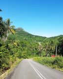 Double line road... Remote road in Borneo Royalty Free Stock Images