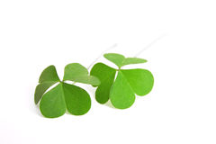 Double the Luck !. Two clovers isolated on white. Perfect for use with Luck or St. Patrick's Day themes stock photography