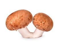Double mushroom champignon Stock Photos