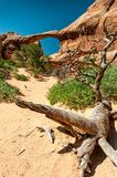 Double O Arch behind a dead piece of wood Royalty Free Stock Photos