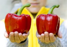 Double peppers Royalty Free Stock Photos
