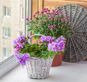 Double petunia in a basket Stock Photo