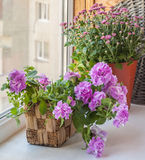 Double petunia in a basket Stock Images