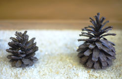 Double pine cone. Big and small pine cone Stock Photos