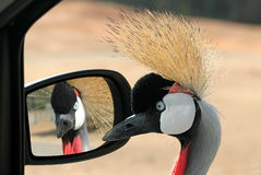 Double Portrait. Picture taken in safari, Israel Stock Images