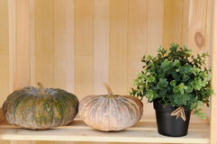 Double pumkins and plant pot on wooden shelf Royalty Free Stock Photography