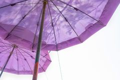 Double purple big umbrella on white stock photo