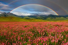 Double rainbow over blooming mountain valley. Summer landscape Stock Image