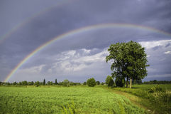 Double Rainbow. Over a tree during a storm with the sun royalty free stock photos