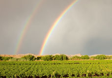 Double rainbow over vineyard Royalty Free Stock Image