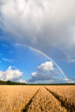 Double rainbow over wheat field Stock Photos