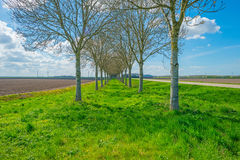 Double row of trees along a road in spring Stock Photos