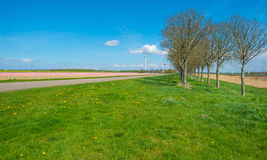 Double row of trees along a road in spring Royalty Free Stock Photo