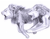 Double running lion sketch Royalty Free Stock Images